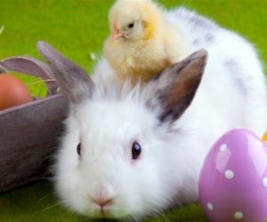 Quelques news entre les lapins, les cloches et les chocolats