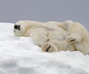Vacances d'hiver et planning de la semaine du 11 février